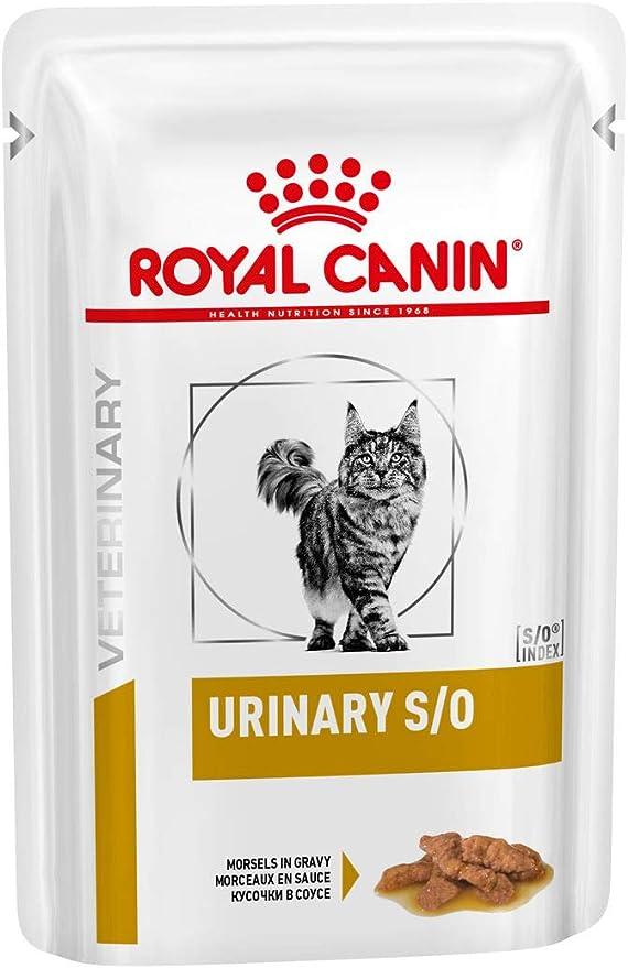ROYAL CANIN Alimentacion 1 Unidad 600 g: Amazon.es: Productos para mascotas