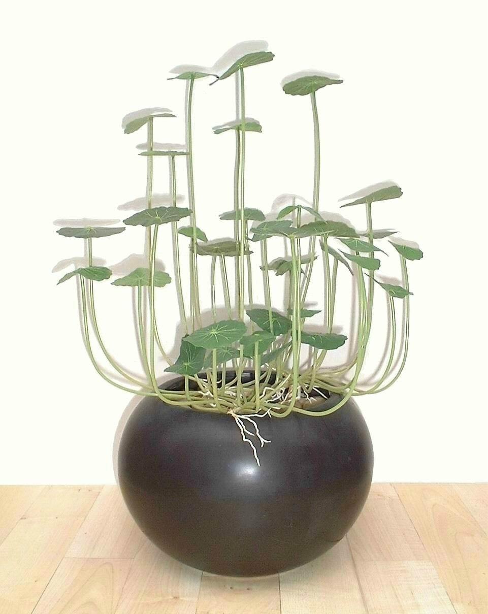 14.5 Chinese Money Plant, Artificial (Without Pot) Neuhaus Decor