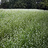 Outsidepride Buckwheat Cover Crop Seed - 20 LB