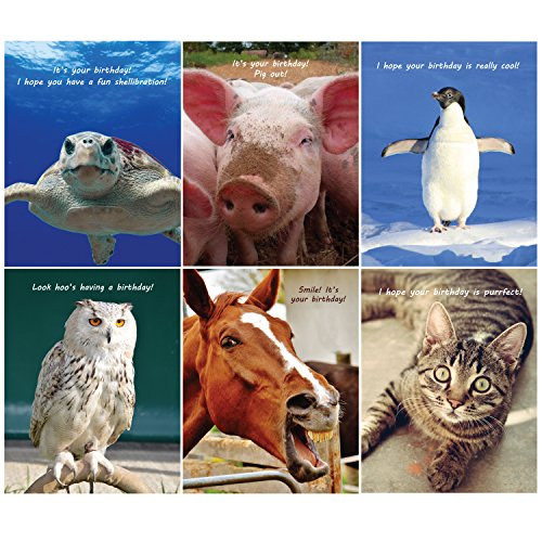 Happy Birthday Funny Animals - 36 Birthday Cards - 6 Designs - Blank Cards - Envelopes Included