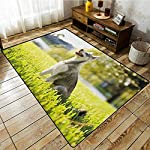 """Collection Area Rug,Alaskan Malamute,Klee Kai Puppy Sitting on Grass Looking Up Friendly Young Cute Animal,Extra Large Rug,6'6""""x8'10"""" Multicolor 7"""