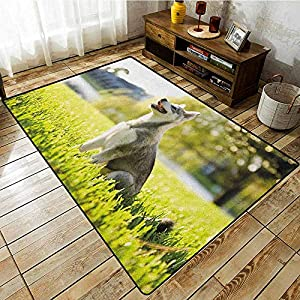 """Collection Area Rug,Alaskan Malamute,Klee Kai Puppy Sitting on Grass Looking Up Friendly Young Cute Animal,Extra Large Rug,6'6""""x8'10"""" Multicolor 14"""