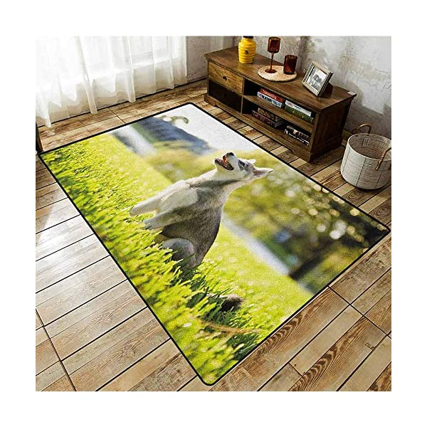 """Collection Area Rug,Alaskan Malamute,Klee Kai Puppy Sitting on Grass Looking Up Friendly Young Cute Animal,Extra Large Rug,6'6""""x8'10"""" Multicolor 1"""