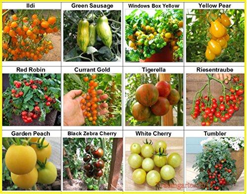 Tomate Set 3 : 12 Sorten Set Mix Cherrytomate Cockteiltomate hohe Toleranz gegen Braunfäule Tomaten Samen Saatgut