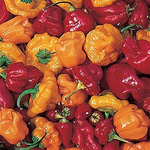 David's Garden Seeds Pepper Hot Caribbean Mix 7334 (Multi) 25 Non-GMO, Open Pollinated Seeds