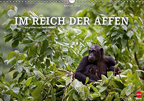 Ingo Arndt: IM REICH DER AFFEN (Wandkalender 2014 DIN A3 quer): Eindrucksvolle Portraits unserer nächsten Verwandten in ihrem natürlichen Lebensraum. (Monatskalender, 14 Seiten)