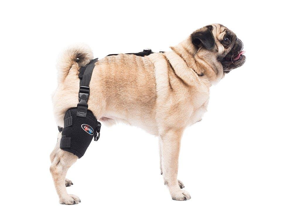 Caldera Pet Therapy Universal Wrap Tarsal/Stifle with Gel, Small, Black