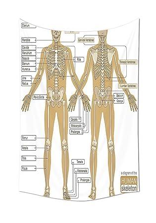 Amazon.de: Echthaar Anatomie Stickset von Menschliches Skelett ...