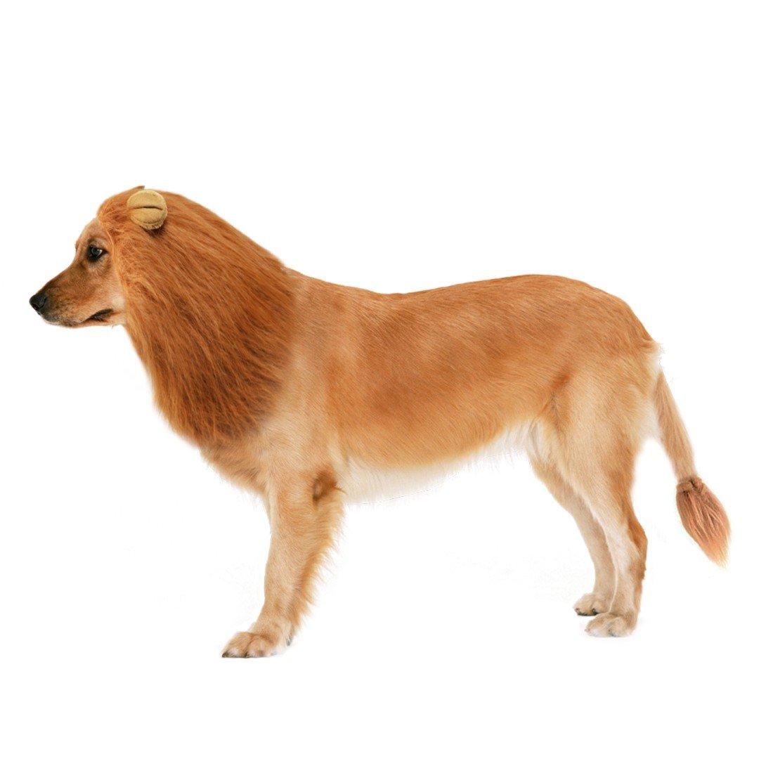 Idepet - Peluca para Perro con Orejas y Cola, diseño de león de Gato con Orejas y Cola, para Fiestas de Navidad de Holloween, Disfraz de Cosplay para Perros ...