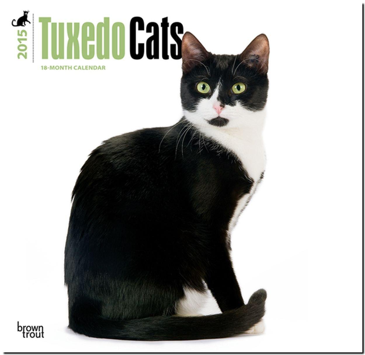Tuxedo Cats 2015 Square 12x12: BrownTrout: 9781465025838: Amazon.com: Books