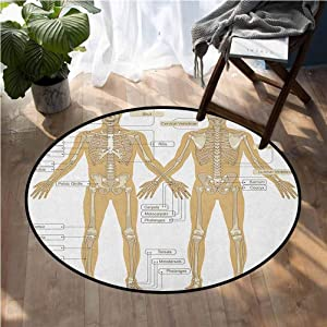 Human Anatomy Round Nursery Carpet Mat Diagram of Human Skeleton System with Titled Main Parts of Body Joints Picture 6.5ft Children's Bedroom Play mat