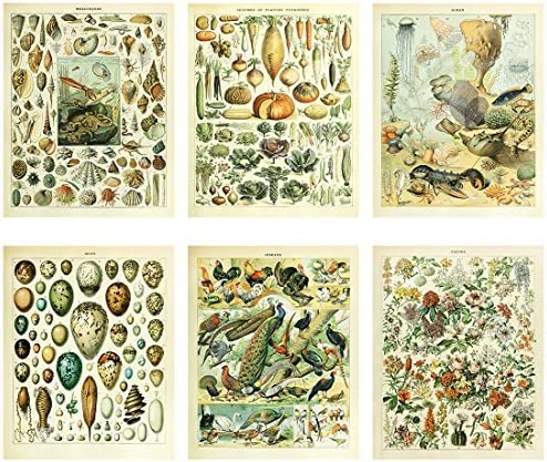 Amazon Com Meishe Art Vintage Poster Print Biology Botanical Science Wall Decor Sea Creature Animals Seashell Vegetables Birds Breeds Species Eggs Identification Chart Flowers Blooming Floral Set Of 6pcs Posters Prints