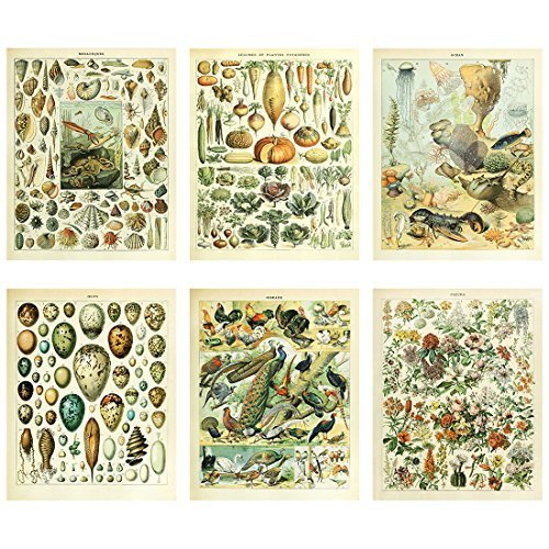Meishe Art Vintage Poster Print Biology Botanical Science Wall Decor Sea Creature Animals Seashell Vegetables Birds Breeds Species Eggs Identification Chart Flowers Blooming Floral Set of 6pcs