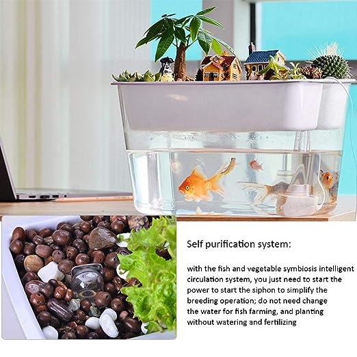 Following Plantas ecológicas para Acuario, Peces, Verduras, simbióticas, de Escritorio, pequeñas Plantas ecológicas, Plantas de Crecimiento de peceras ...