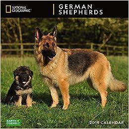 National Geographic German Shepherds 2019 Wall Calendar: Zebra