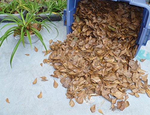 (1 Gallon DRY MID AIR CATCH ORGANIC OAK LEAF LITTER Terrarium Dart Frog VIVARIUM)