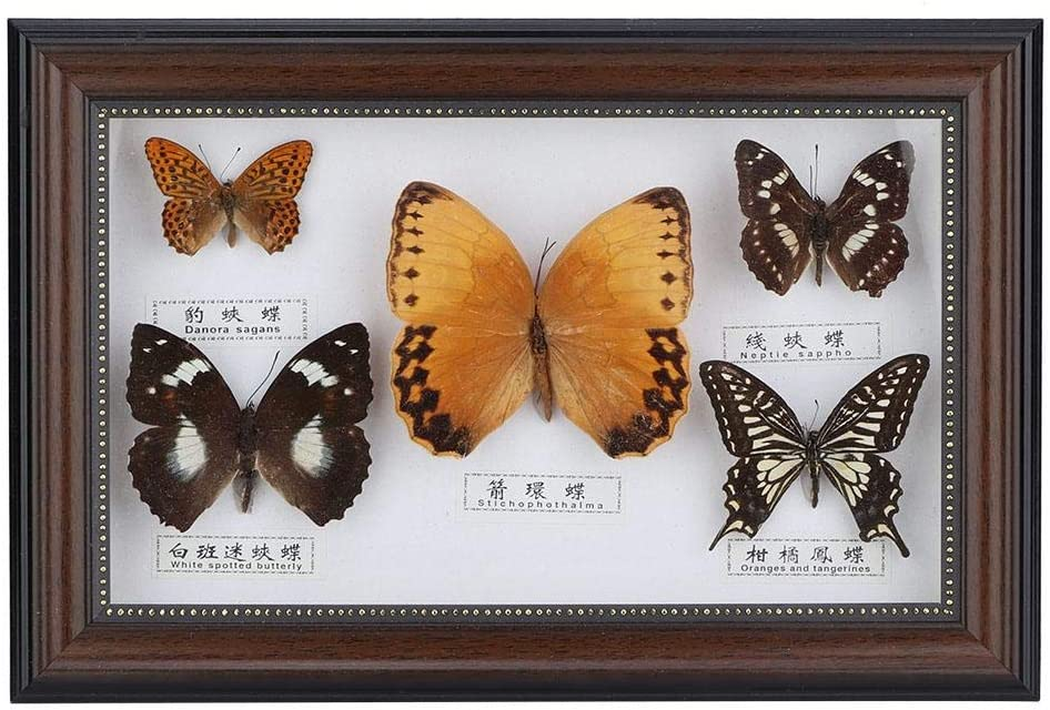 AUNMAS Exquisite Butterflies Insect Specimen Picture Frame Craft Display Photo Frame Birthday Gift Home Decor(1#)