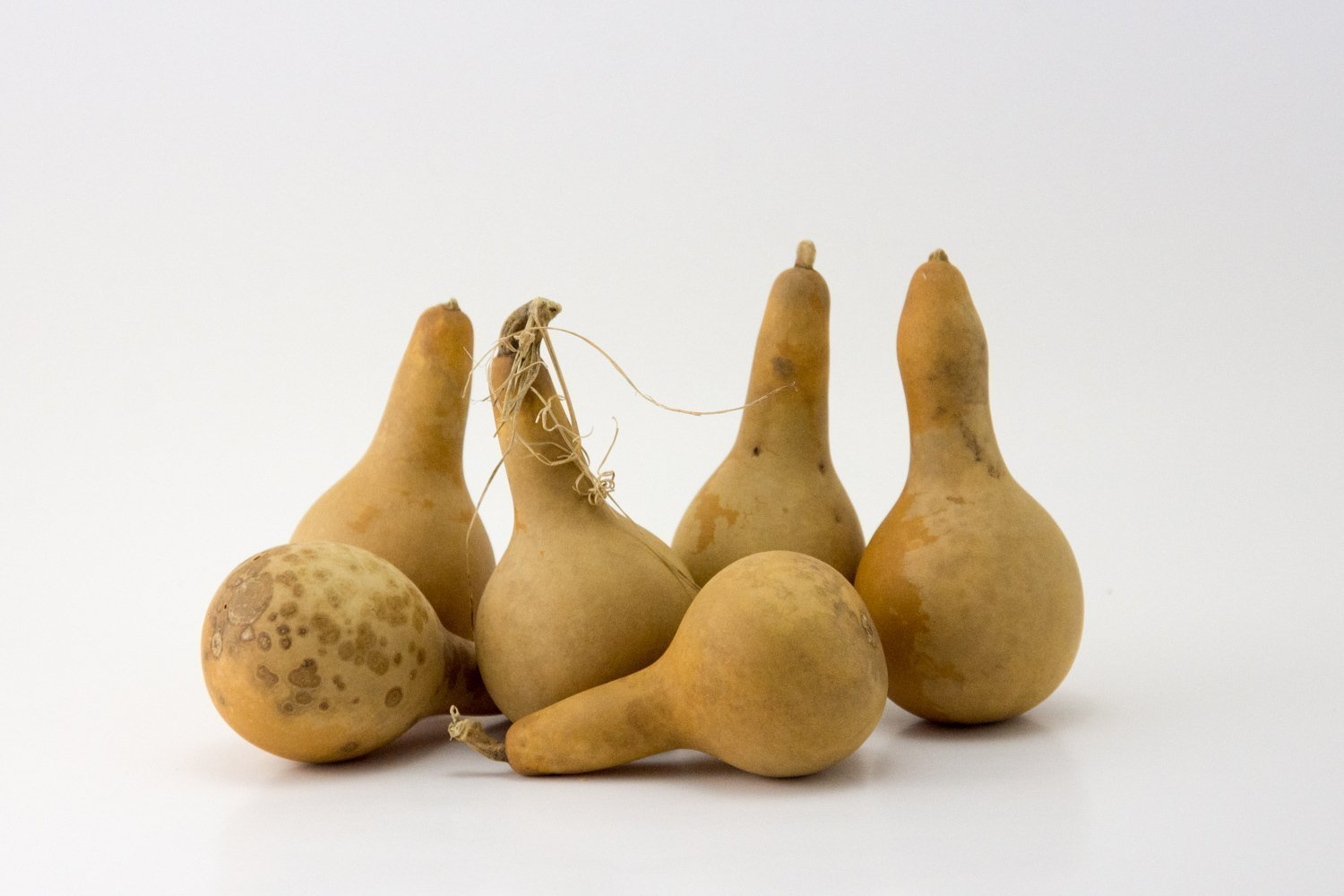Mini Dipper Gourds for your Craft Project, Box of 15