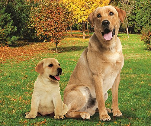 - Labrador Dog and Lab Puppy in the Park Fleece Throw Blanket 50
