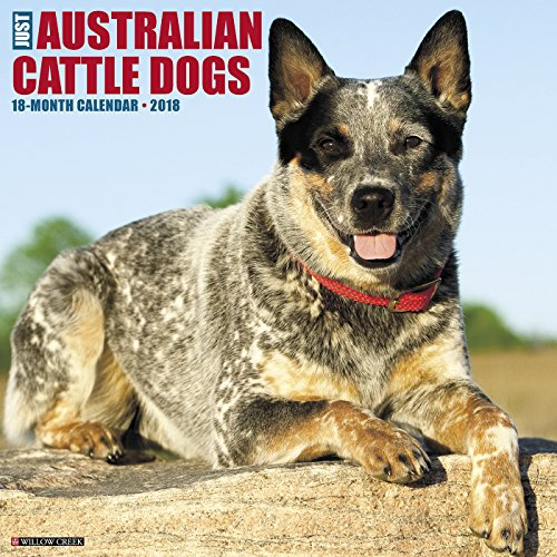 Just Australian Cattle Dogs 2018 Calendar (Australian Cattle Dog Puppy)