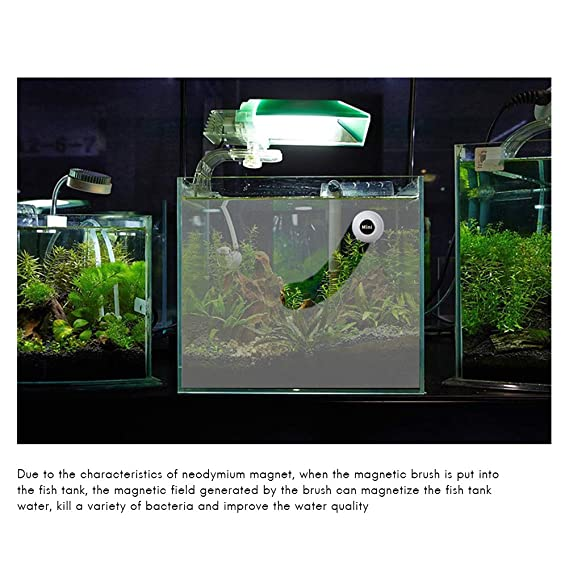 Mallalah - Mini Cepillo magnético de Limpieza para Acuario de Cristal con imán, depósito de Pescado, fácil de Eliminar Algas: Amazon.es: Hogar