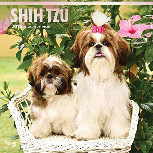 Shih Tzu 2018 Wall Calendar