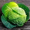 Cabbage Seeds - Savoy Perfection - Non-GMO, Heirloom - Vegetable Garden & Micro Greens Seeds by Mountain Valley
