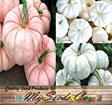 Best MySeeds.Co Pumpkin Seeds - BIG PACK - (42-50+) Red-ish (Pink) White Review