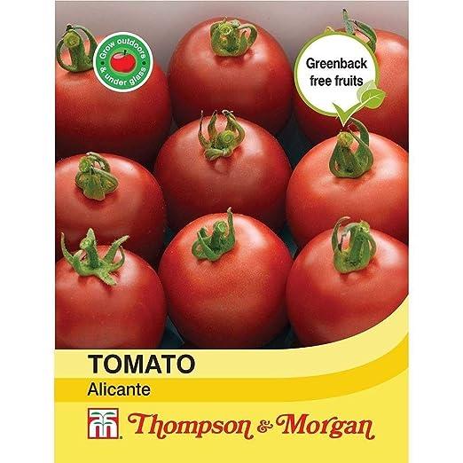 ScoutSeed Thompson & Morgan Tomato Alicante Semillas: Amazon.es ...