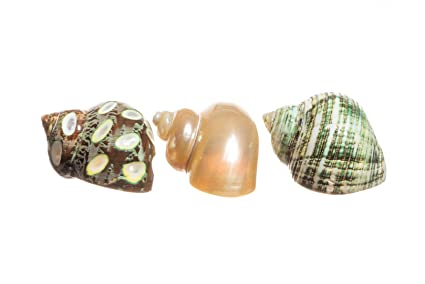 Nautical Crush Trading Hermit Crab Home Turbo Shell | 1 Spotted Brown, 1 Pearlized,