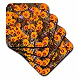 3dRose cst_72146_3 Spring Flowers, Namaqualand, South Africa-AF42 RBE0099-Ralph H. Bendjebar-Ceramic Tile Coasters, Set of 4