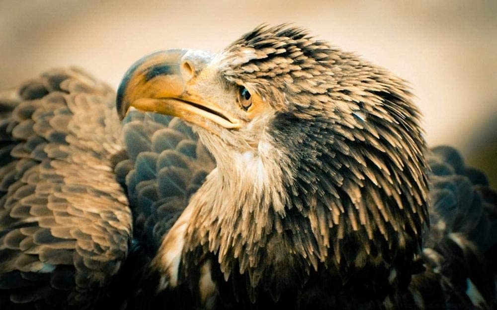 5D Diamond Painting Art Full Drill Set DIY by Number Kits for Adults Crystal Embroidery Pictures Bald Eagle Cross Stitch Kit for Home Decor 70X110Cm(27.5X43.3Inches)