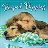 2019 Pooped Puppies Mini Calendar: by Sellers Publishing, 7 x 7; (CS-0469)