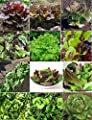 David's Garden Seeds Lettuce Seed Collection DS927 (Multi) 12 Varieties 5000 Plus Seeds (Open Pollinated, Heirloom, Organic)