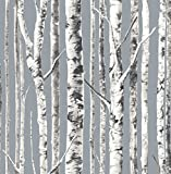 Birch Wallpaper Silver Trees Forest White Black Classic Nursery Double Roll