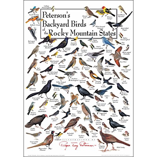 Earth Sky & Water Poster - Peterson's Backyard Birds of the Rocky Mountain States