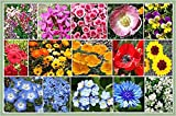 Search : Low Growing Mix of Wildflowers - Shorty