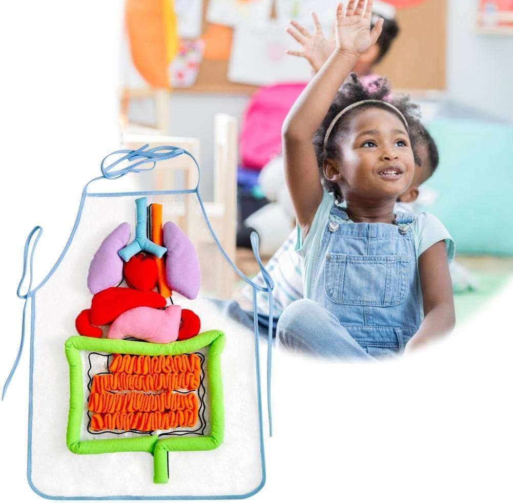 Luerme 3D Organe Tablier Simulation Corps Humain Tablier Ustensiles Denseignement Enfants Puzzle Illumination Tablier pour La Maison Pr/éscolaire /Éducation Primaire Aides p/édagogiques