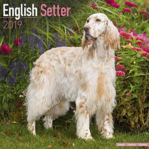 English Setter Calendar 2019 - Dog Breed Calendar - Wall Calendar 2018-2019