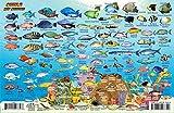 Guanaja Bay Islands Honduras Dive Map & Coral Reef Creatures Guide Franko Maps Laminated Fish Card