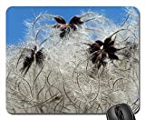 Mouse Pads - Clematis Vitalba Pods Soft Fluffy Seeds Liane 350