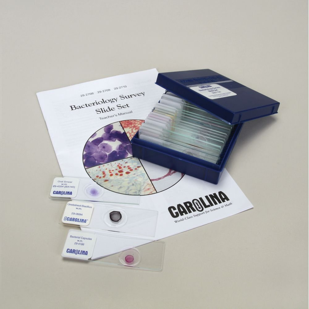 Bacteriology Survey Microscope Slide Set 3