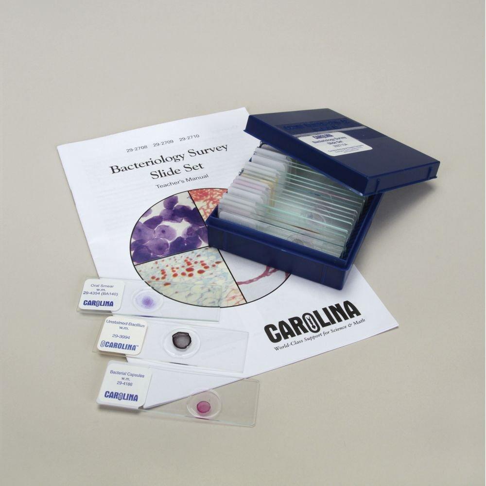 Bacteriology Survey Microscope Slide Set 3 by Carolina Biological Supply Company