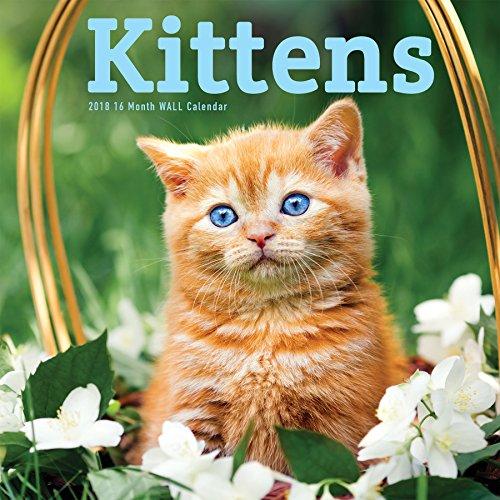 Avalon 2018 Kittens Wall Calendar, 12
