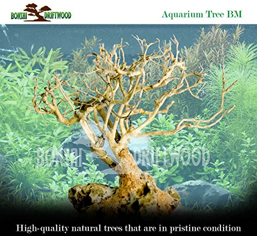 Bonsai Driftwood Aquarium Tree (5 Inch Height) Natural, Handcrafted Fish Tank Decoration | Helps Balance Water pH Levels, Stabilizes Environments | Easy to Install by Bonsai Driftwood (Image #5)
