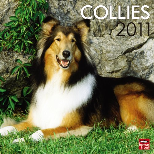 Collie Wall Calendar 2010 - Collies 2011 Square 12X12 Wall Calendar (Multilingual Edition)