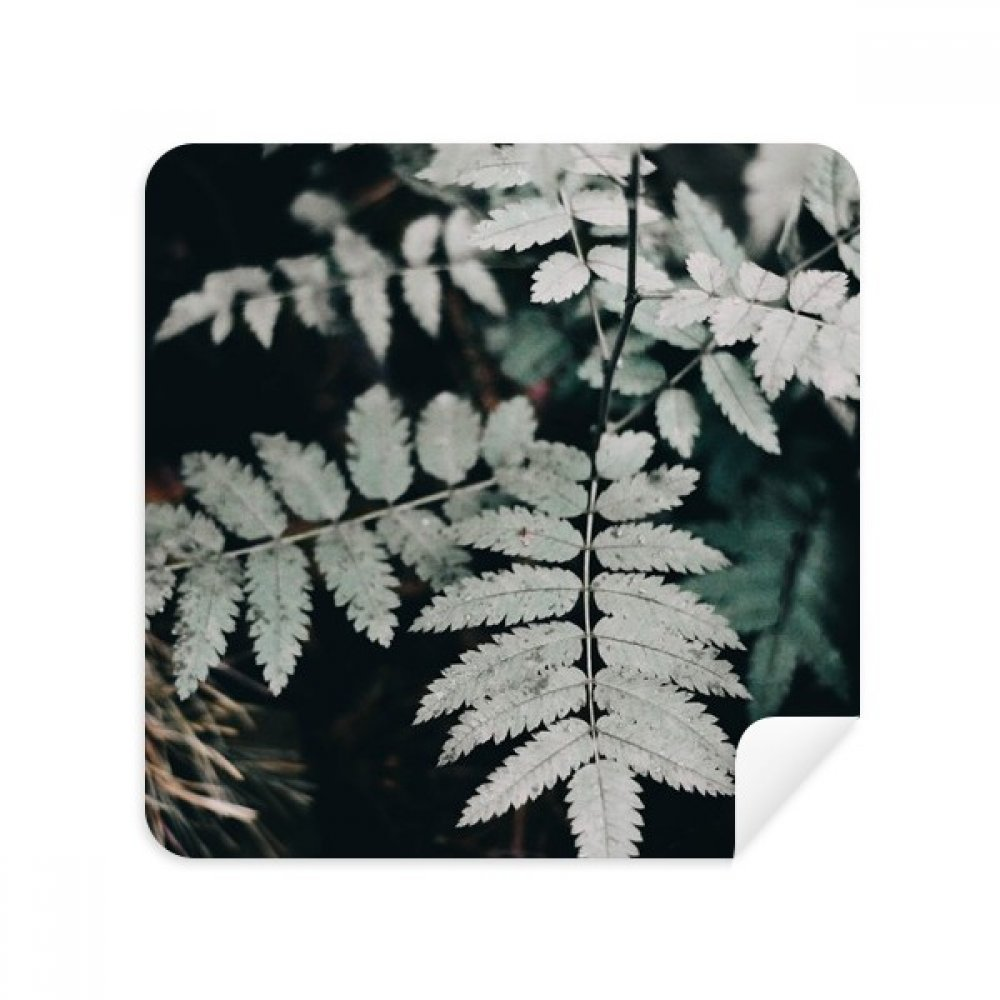 Photography葉植物Picture Natureメガネクリーニングクロス電話画面クリーナースエードファブリック2pcs   B07C97QYPP