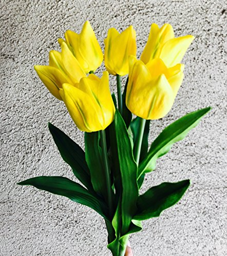 Stem Tulip Parrot (Meide Group USA 24