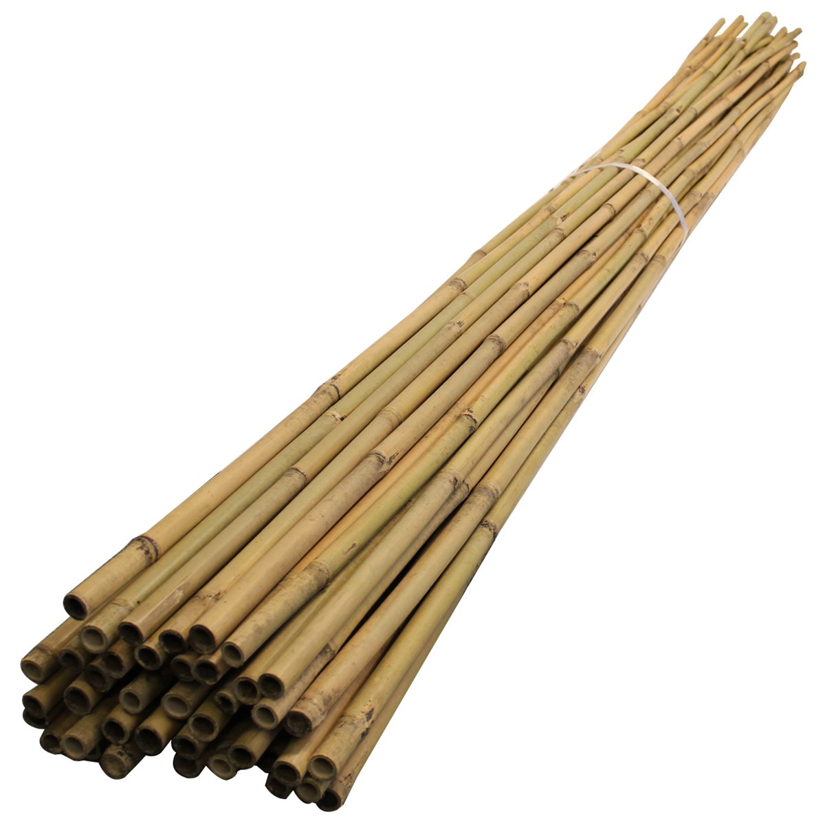 1.8m Bamboo (100 pack) Garden Canes, 6ft,14-16mm dia.thick. Plant Support Poles. 180cm, 6', 1800mm long 6' Suregreen
