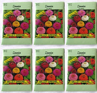 Valley Greene (6 Pack) 250 mg/Package Zinnia Lilliput Heirloom Variety Seeds